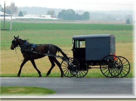 amish_horse&buggy